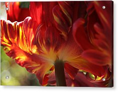 Heat Acrylic Print by Connie Handscomb