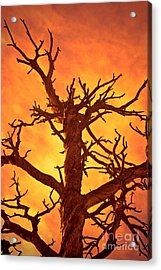 Hell Acrylic Print by Charles Dobbs