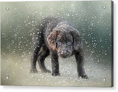 Her First Snow Acrylic Print by Jai Johnson