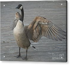 Here I Am Acrylic Print by Heather Hennick