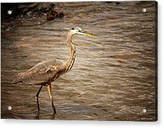 Heron At The Lake Acrylic Print by Greg Simmons