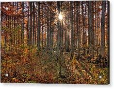 Heron Pond Cypress Trees Acrylic Print by Steve Gadomski