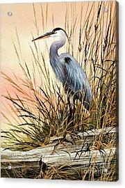 Heron Sunset Acrylic Print by James Williamson