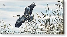 Herons Flight Acrylic Print by James Williamson