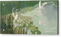 Herons In Summer Acrylic Print by Newell Convers Wyeth
