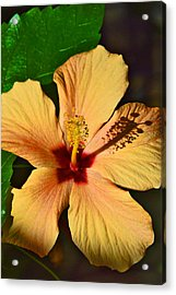 Hibiscus. Acrylic Print by Andy Za