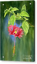 Hibiscus Chinese Red Lantern With Background Acrylic Print by Sharon Freeman