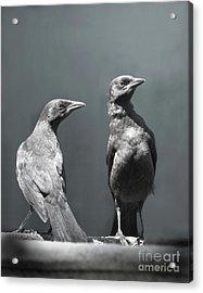 High Alert Acrylic Print by Jan Piller