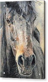High Desert  Acrylic Print by Joanne Stevens