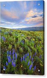 High Desert Spring Acrylic Print by Mike  Dawson