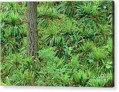 Hillside Ferns Acrylic Print by Greg Vaughn - Printscapes