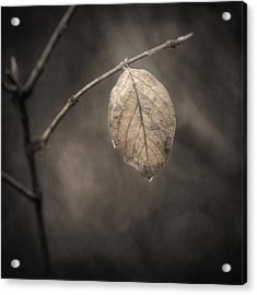 Holding On Acrylic Print by Scott Norris