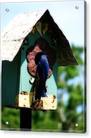 Home Again Acrylic Print by Laura Brightwood