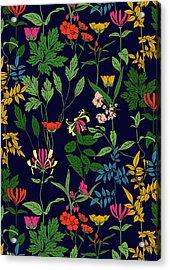 Honeysuckle Floral Acrylic Print by Sholto Drumlanrig