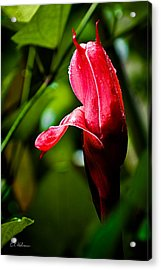 Horned Blossom Acrylic Print by Christopher Holmes