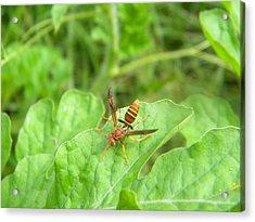 Hornet On Watermelon Acrylic Print by Angi Nagel