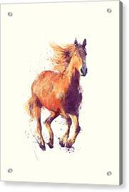 Horse // Boundless Acrylic Print by Amy Hamilton