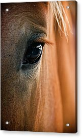 Horse Eye Acrylic Print by Adam Romanowicz