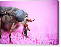 Horse Fly Acrylic Print by Ryan Kelly