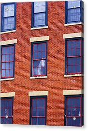 Horse In An Upstairs Window Acrylic Print by Anna Villarreal Garbis