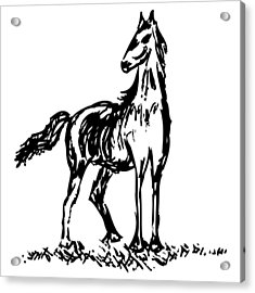 Horse Acrylic Print by Karl Addison