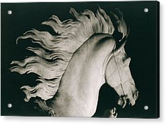 Horse Of Marly Acrylic Print by Coustou