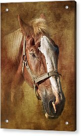 Horse Portrait II Acrylic Print by Tom Mc Nemar