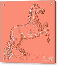 Horse Prancing Acrylic Print by Aloysius Patrimonio