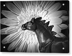 Horse Startled By A Daisy Acrylic Print by Jeff  Gettis
