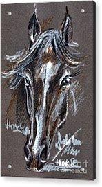 Horse Study Acrylic Print by Daliana Pacuraru