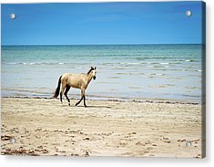 Horse Walking On Beach Acrylic Print by Vitor Groba