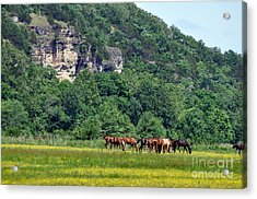 Horses On The Rubideaux Acrylic Print by Marty Koch