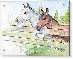 Horses Watercolor Sketch Acrylic Print by Olga Shvartsur