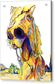 Horsing Around Acrylic Print by Pat Saunders-White