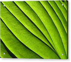 Hosta Leaf 2 Acrylic Print by Dustin K Ryan