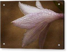 Hostas Bloom Acrylic Print by Karol Livote