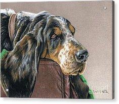 Hound Dog Acrylic Print by Sarah Batalka
