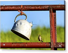 House Wren Feeding Offspring Acrylic Print by Thomas R Fletcher