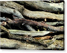 How Much Wood Would A Woodchuck Chuck Natural Wood Pile Ledge Park Wisconsin Acrylic Print by Laura Pineda