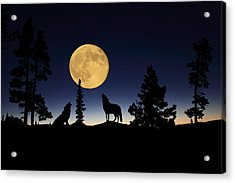 Howling At The Moon Acrylic Print by Shane Bechler