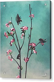 Hummingbears Acrylic Print by Cynthia Decker