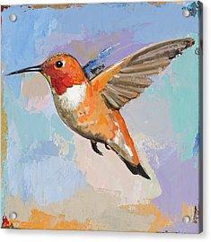 Hummingbird #7 Acrylic Print by David Palmer