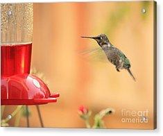Hummingbird And Feeder Acrylic Print by Carol Groenen