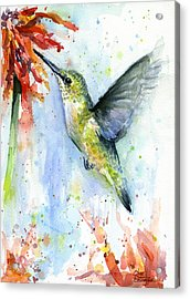 Hummingbird And Red Flower Watercolor Acrylic Print by Olga Shvartsur