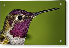 Hummingbird Head Shot With Raindrops Acrylic Print by William Lee