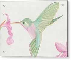 Hummingbird Acrylic Print by Joanna Aud