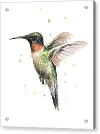 Hummingbird Acrylic Print by Olga Shvartsur