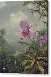 Hummingbird Perched On An Orchid Plant Acrylic Print by Martin Johnson Heade