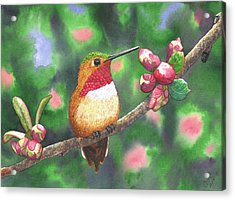 Hummy Acrylic Print by Catherine G McElroy