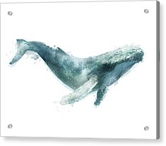 Humpback Whale From Whales Chart Acrylic Print by Amy Hamilton